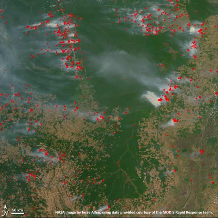 Amazon Rainforest Fires – the reality of the situation
