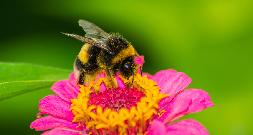 What do Bees Eat and Why we all Need to be Talking about Honey Bees Favourite Flowers
