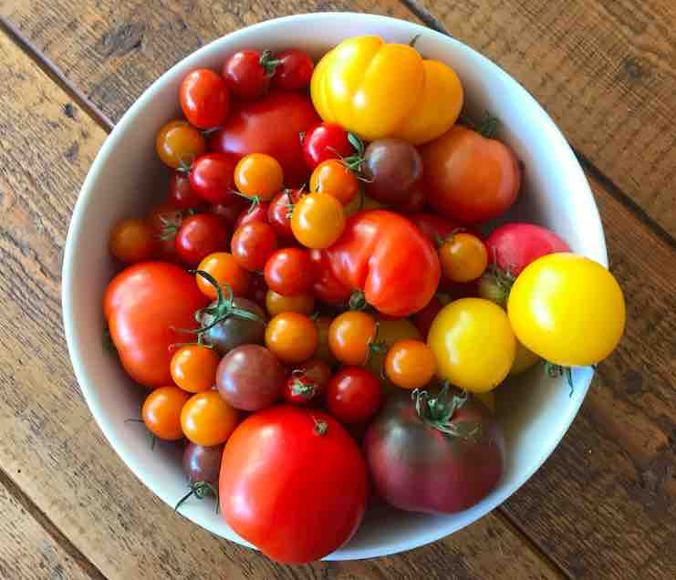 tomatoes selection