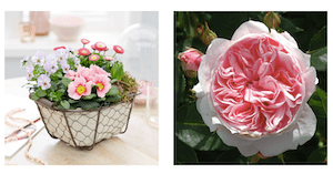 Crocus - Mother's Day Gift Ideas from Crocus. Beautiful flowers and plants